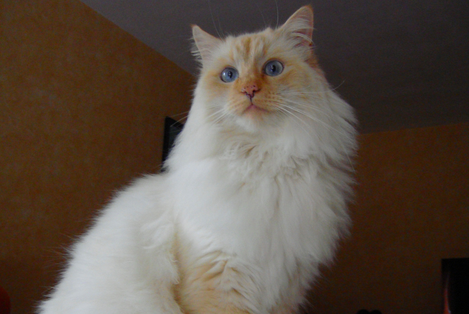 Disappearance alert Cat miscegenation Male , 13 years Puybegon France