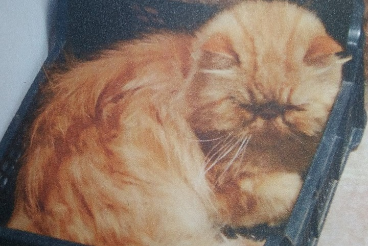 Disappearance alert Cat  Male , 9 years Soual France