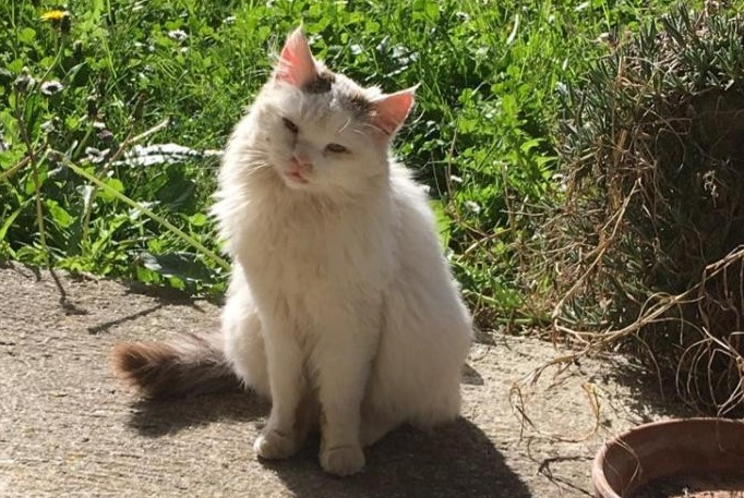 Discovery alert Cat Female , Between 9 and 12 months Saint-Sulpice-la-Pointe France