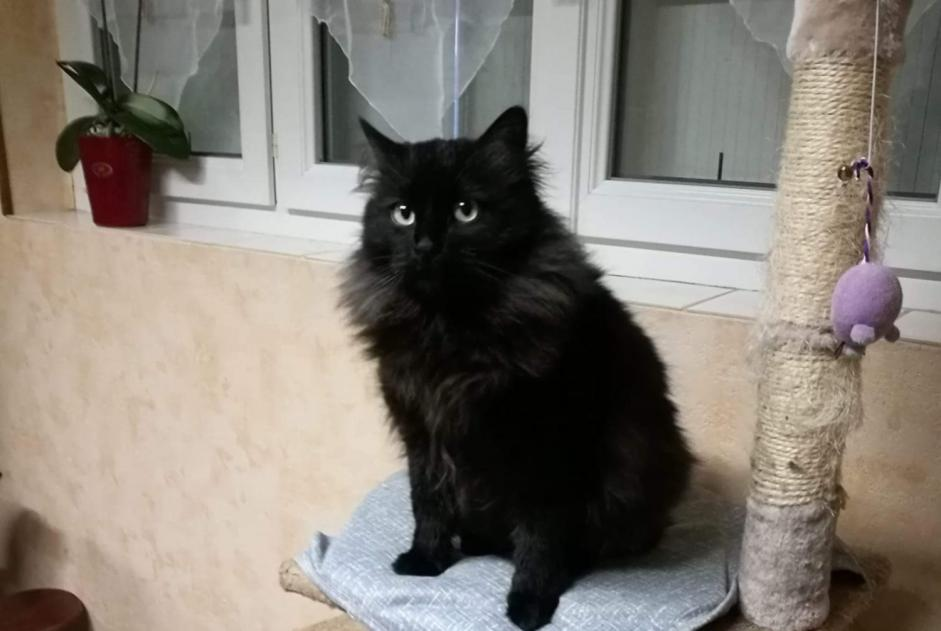 Disappearance alert Cat  Male , 3 years Saint-Martin-d'Auxigny France