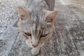 Discovery alert Cat Male , 5 years Canet France