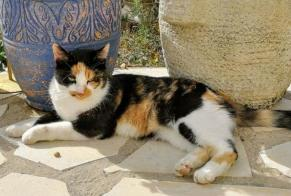 Disappearance alert Cat Female , 4 years Sainte-Marie-de-Ré France