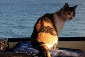 Disappearance alert Cat  Female , 12 years Pisany France