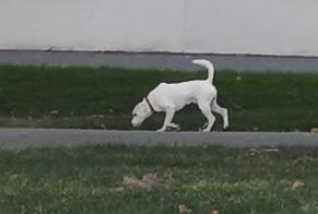 Discovery alert Dog Unknown La Rochelle France