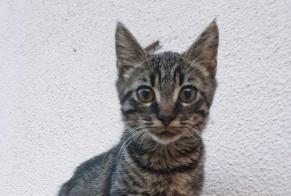 Discovery alert Cat Female Arnage France
