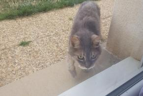 Discovery alert Cat Unknown Guichainville France