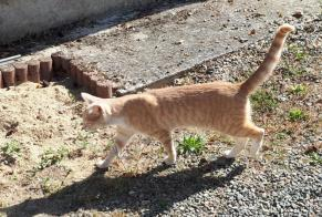 Discovery alert Cat Unknown Spay France