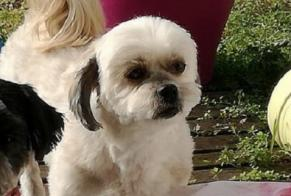 Disappearance alert Dog miscegenation Female , 11 years Pacy-sur-Eure France