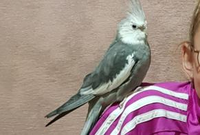 Disappearance alert Bird Male Hyères France