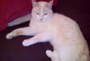 Disappearance alert Cat Male , 4 years Draguignan France