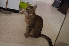 Disappearance alert Cat miscegenation Male , 3 years Ollioules France