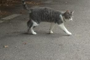 Discovery alert Cat Female Narbonne France