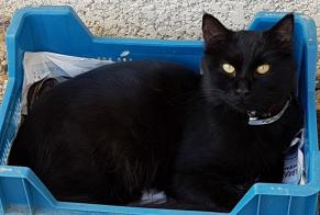 Disappearance alert Cat Male , 1 years Narbonne France