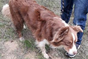 Discovery alert Dog  Male Preixan France