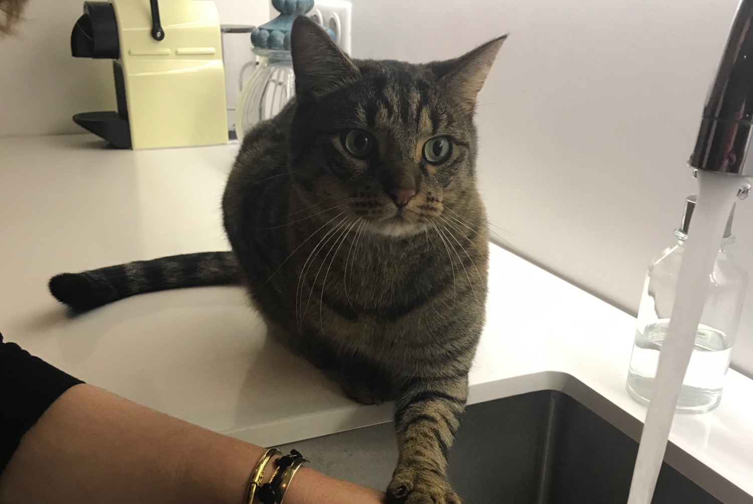 Chat le plessis robinson