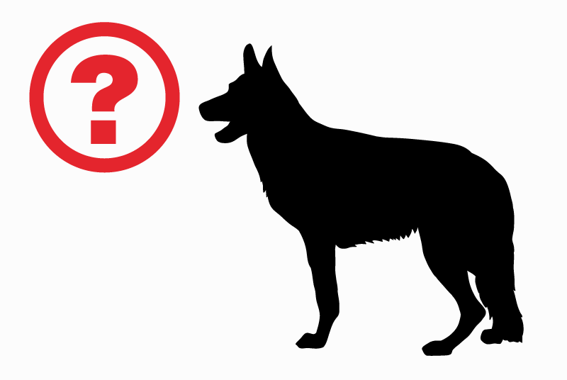 Discovery alert Dog miscegenation Unknown Les Moitiers-d'Allonne France